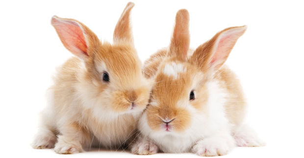 animal testing a preventable inhumane act Let decision makers know that no cosmetics product or ingredient is worth  inflicting suffering on animals and that america must never allow cruel product  tests.
